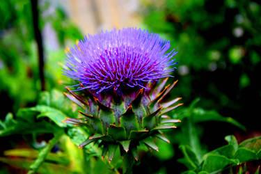 Artichoke flower 1 by Brimo13371