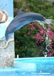 Cuba - Cuban Dolphin