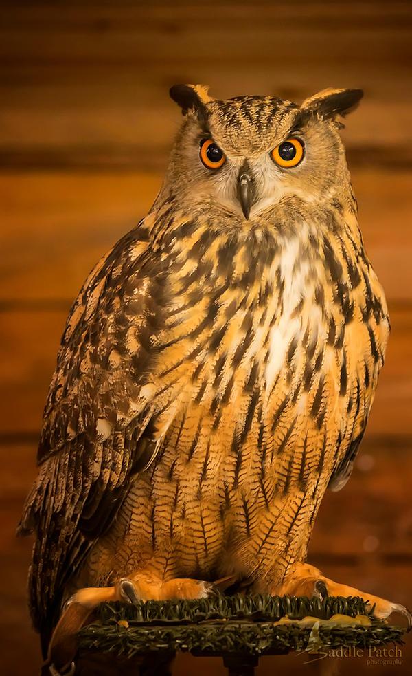 Eagle Owl by SaddlePatch