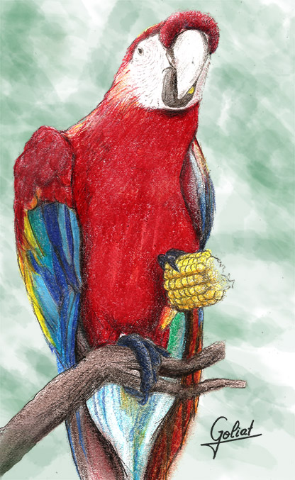 Parrot by Goliat74