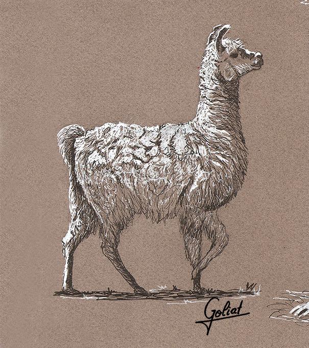 Llama by Goliat74