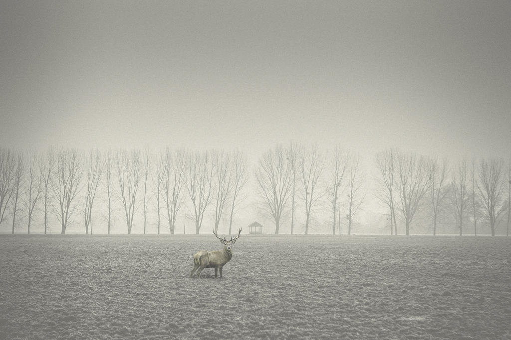 DEER in the FOG by omerphotography