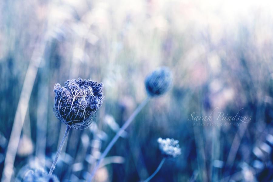 Somewhere. by Blueberryblack