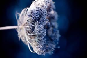 seeds. by Blueberryblack