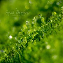 Moss. by Blueberryblack