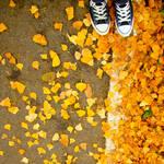 autumn split. by Blueberryblack