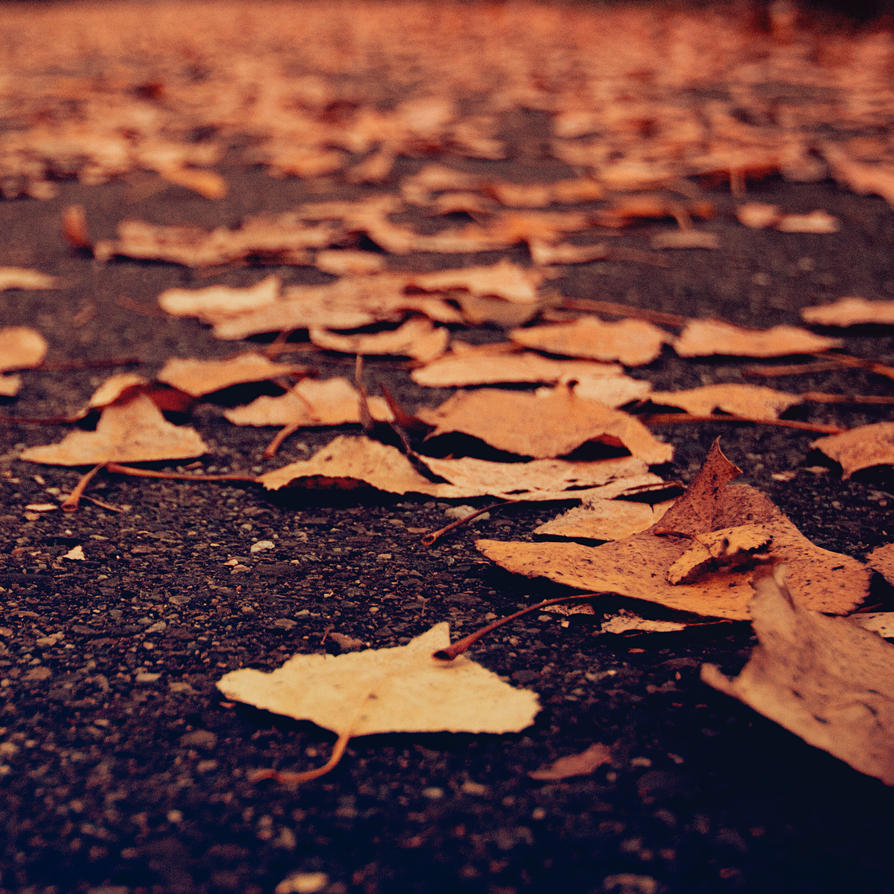 fallen leaves. by Blueberryblack
