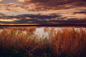 Red Dawn. by Blueberryblack