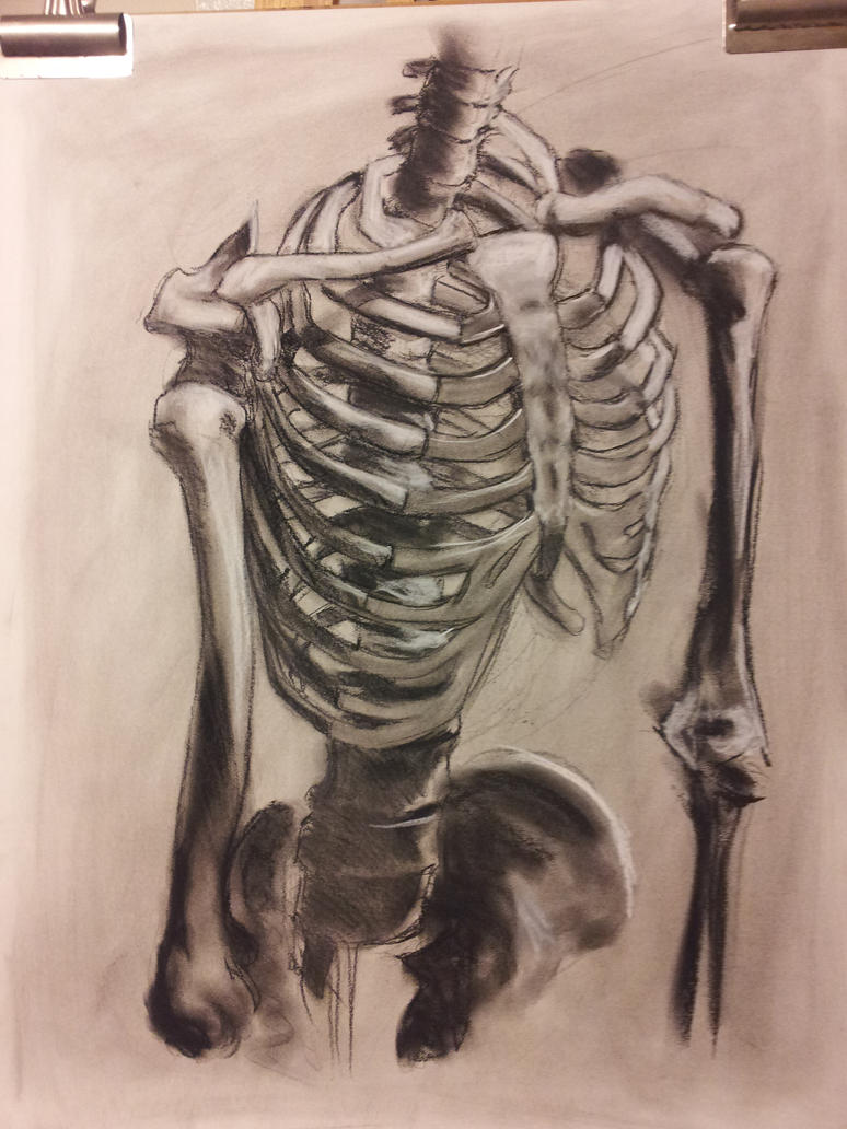 Anatomy Study Rib cage by RichardBlumenstein on DeviantArt