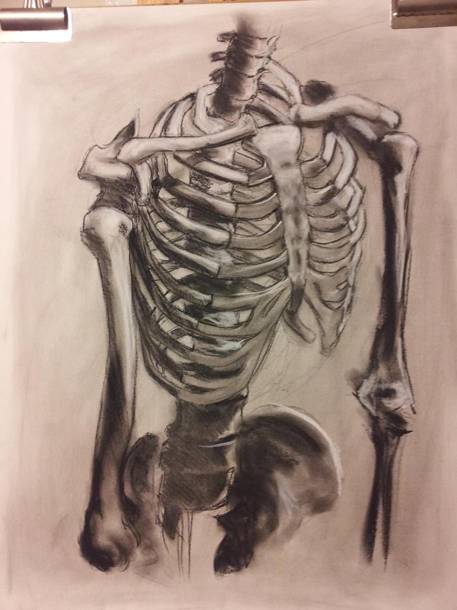 Anatomy Study Rib cage by RichardBlumenstein on DeviantArt