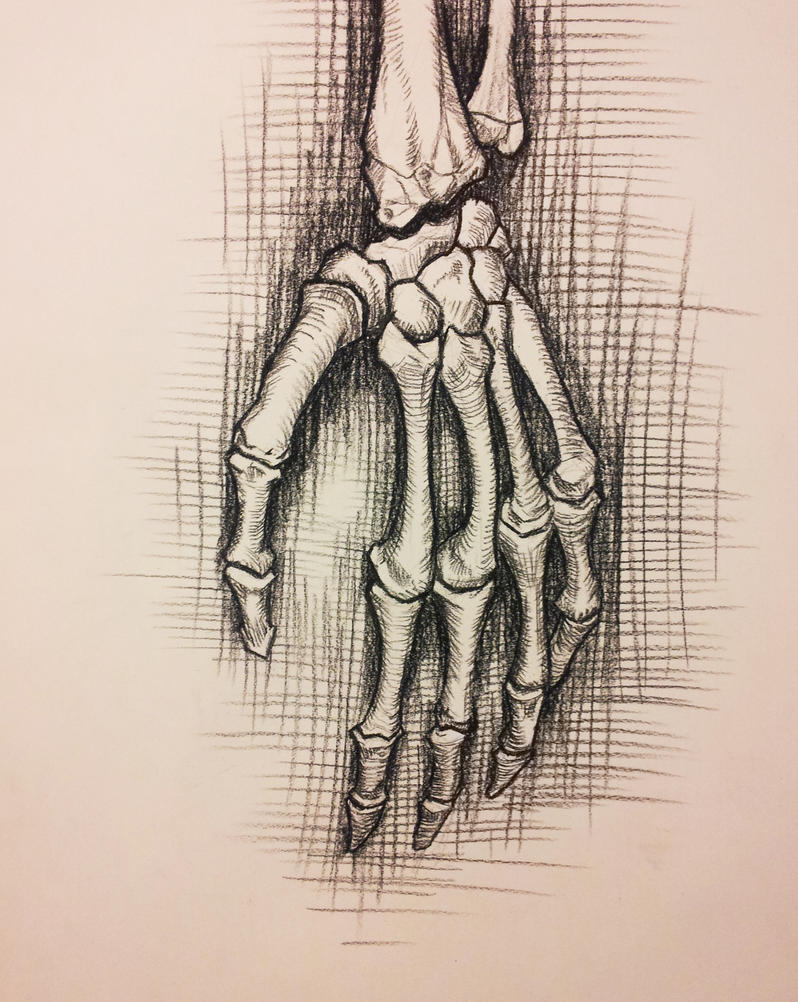 Anatomy Study Skeleton Hand By Richardblumenstein On Deviantart
