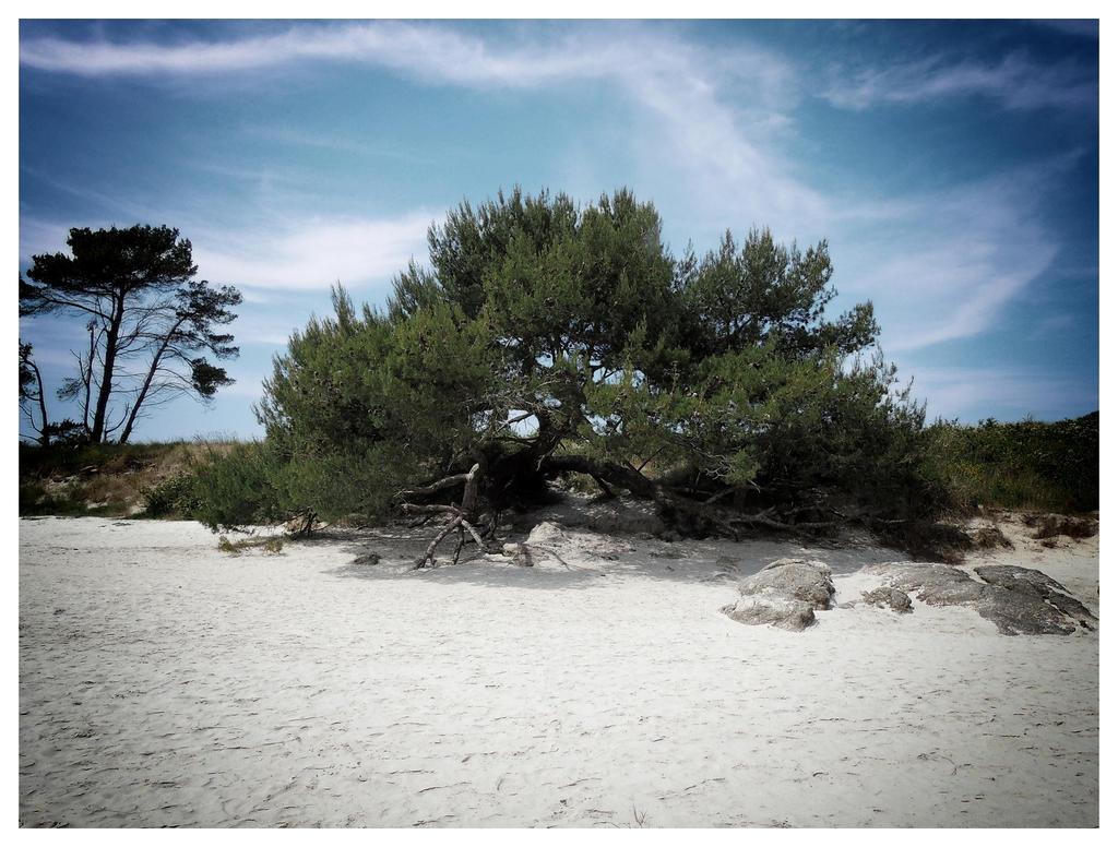 Tree by fugiDUDUP