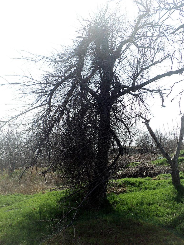 Broken tree by NGC292