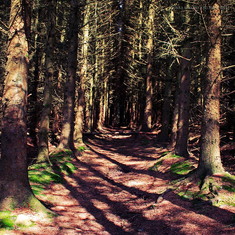 Forest by medinka