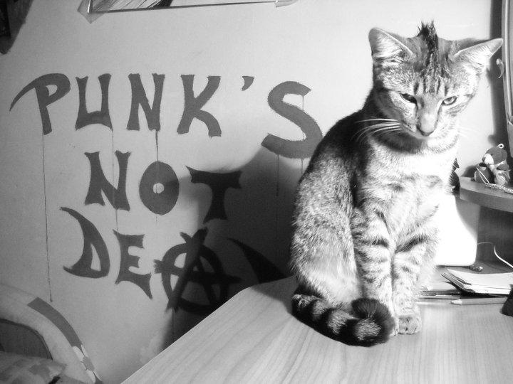Punk cat by moroaik