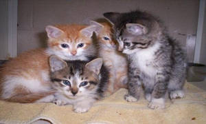 kittens by jayarf