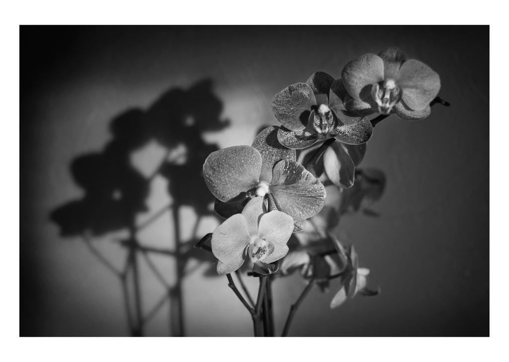 rayon de soleil by 13essylu