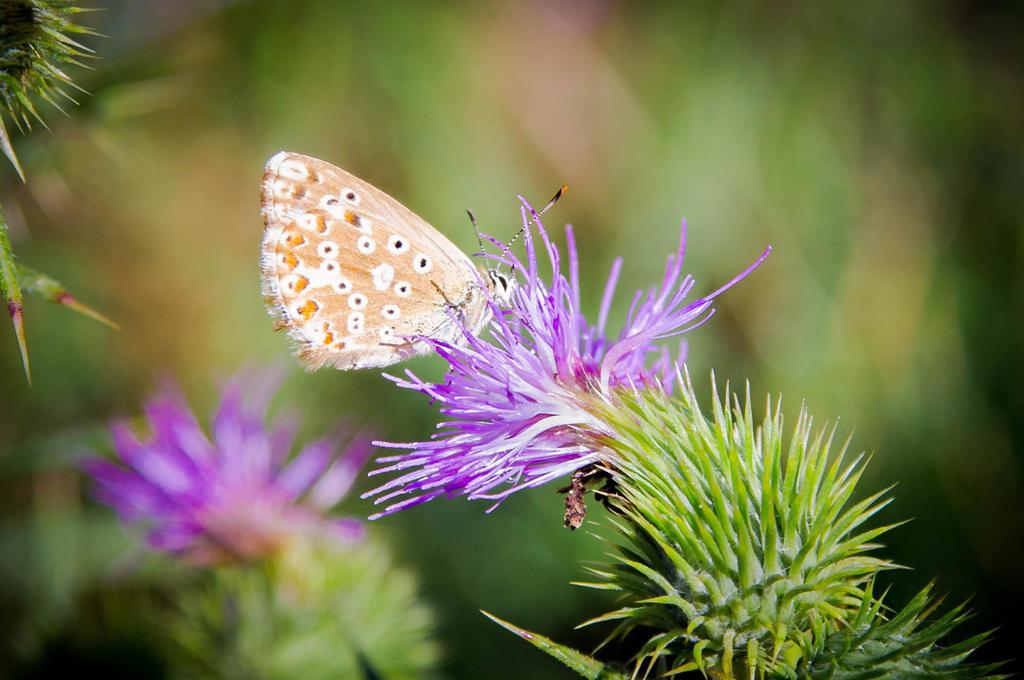 papillon by 13essylu