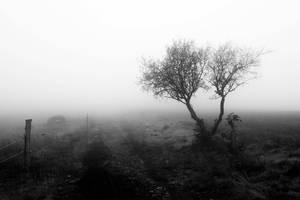 marcher dans le brouillard by 13essylu