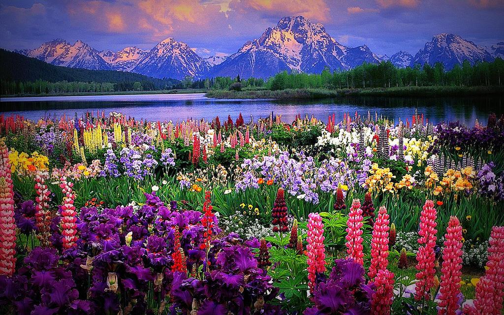 Alaska! by Boomagoo