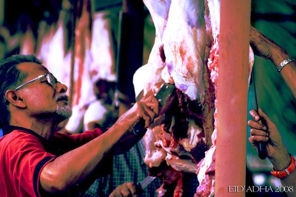 Adakah semata-mata haiwan yang terkorban? ~ picture by tya of deviant art.