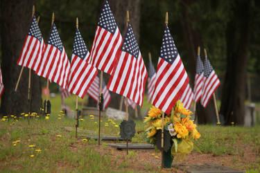 Veteran's Day by MDDahl