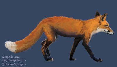 Fox by DaniGrillo