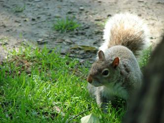 Squirrel - Boston Public Gardn by LinkOni