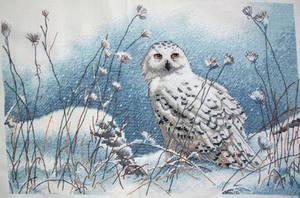 Northwind Owl by EnigmaticWriterGirl