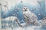 Northwind Owl