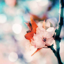 Spring Flower by starfruit89