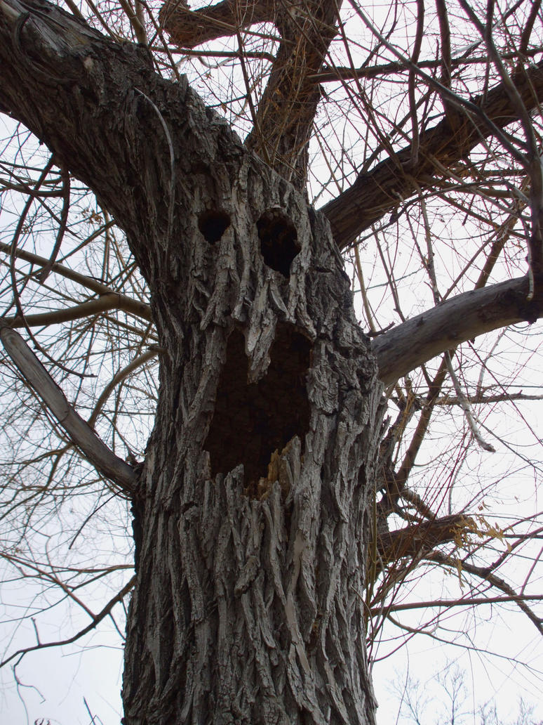 [Image: scary_tree_by_cyber_rabbit-d3f3ei2.jpg]