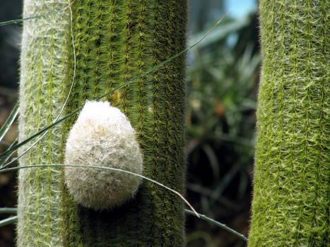 A bunny-cactus...?