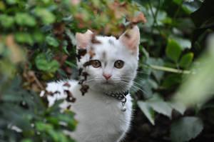 Through the  leaves... by EchelonxAnna