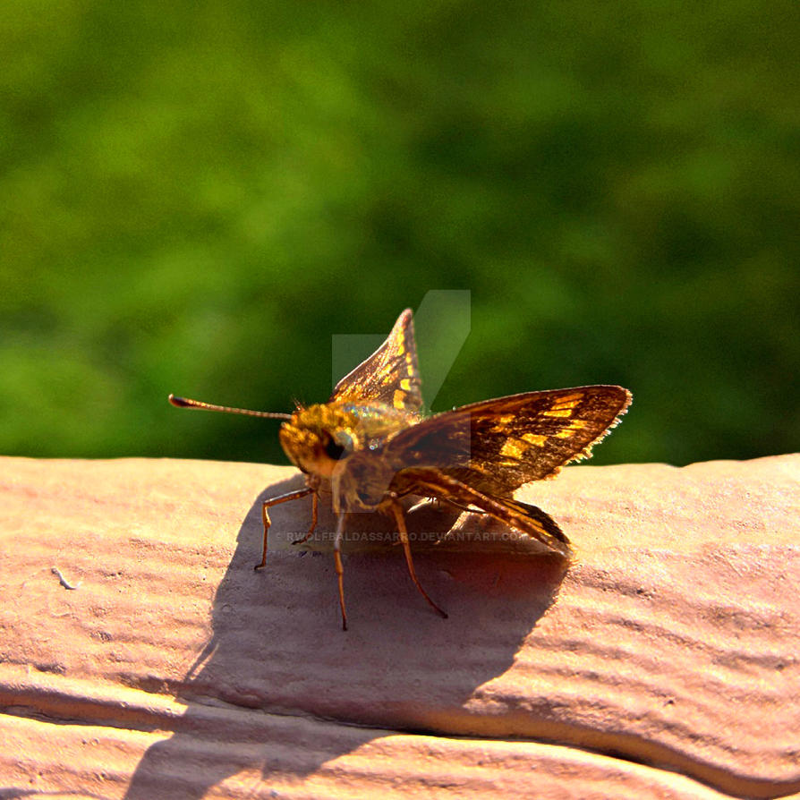 A Bug's Life by rwolfbaldassarro