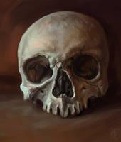 skull 3 by aleksandvagne
