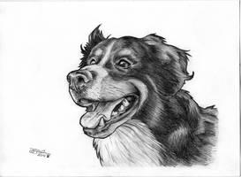 Isla Dog by jetdog-art