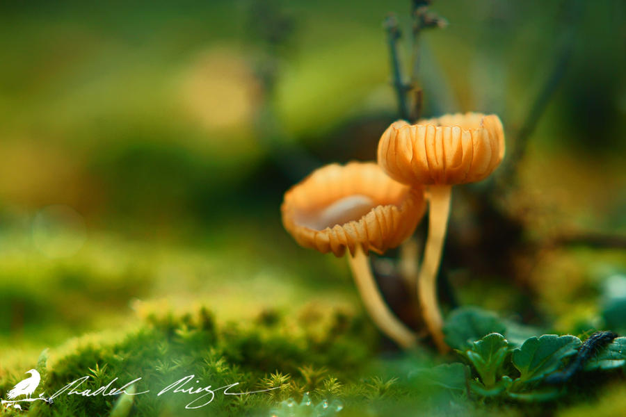 My 1st Daily Deviation - Macro of Mushrooms by PhotoDragonBird