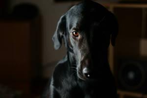 My doggy friend Sam... 11 by PhotoDragonBird
