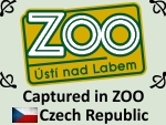 Zoo by PhotoDragonBird