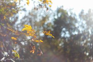 Autumn bokeh by PhotoDragonBird