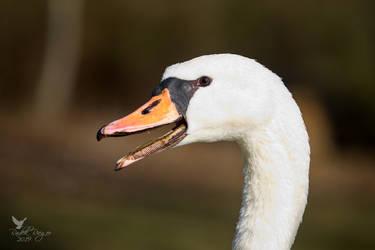 Look at my beak! by PhotoDragonBird