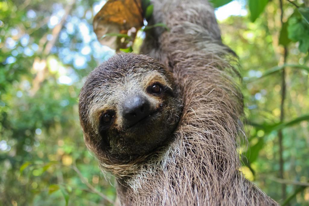 Happy sloth quotes lol rofl com