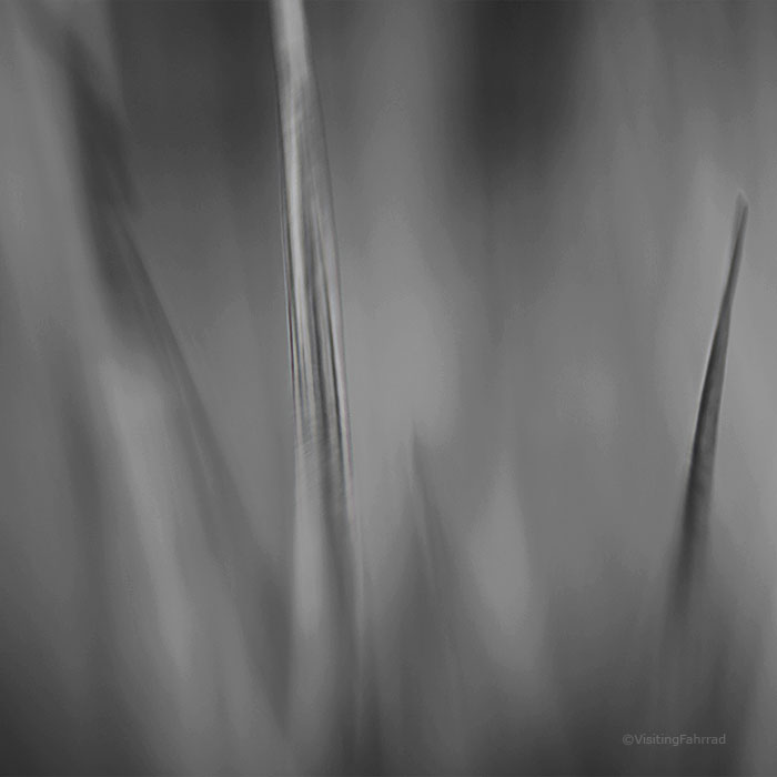 leaf of grass III by VisitingFahrrad