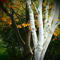 Aupres de mon arbre....