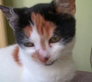 PotofPepper's Profile Picture