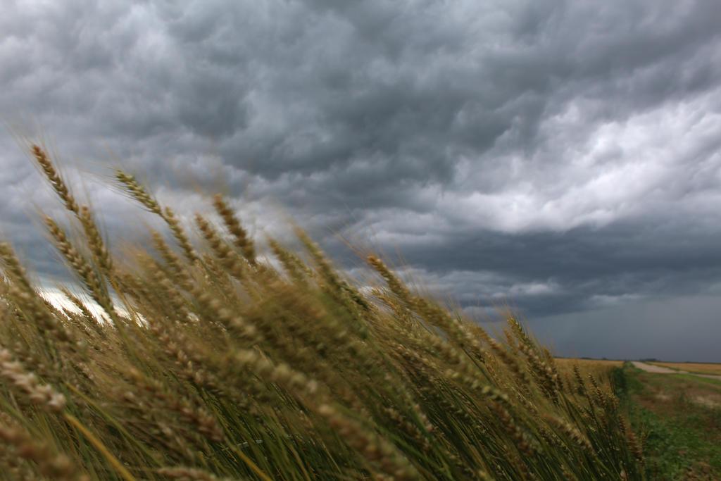 Wheat fields waving by tattookelly