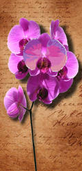 Orchid by Peorthyr