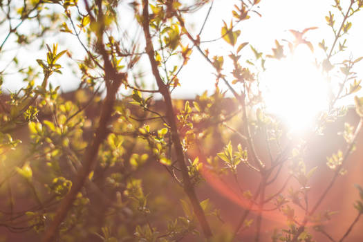 Spindle Sun