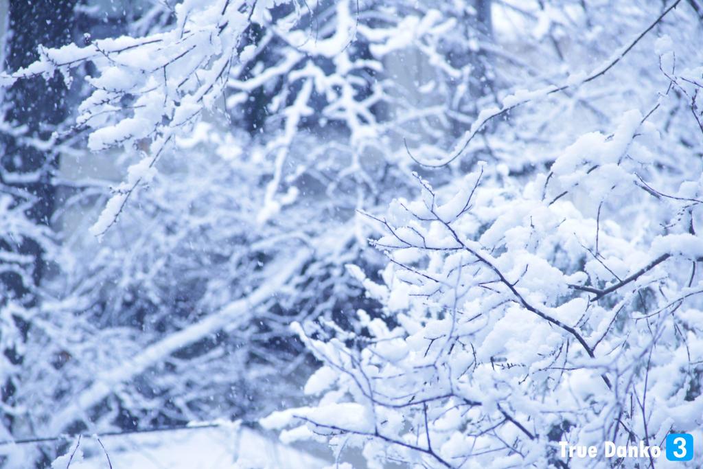 Winter 1 by TrueDanko3